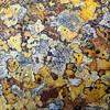Likin' the groovy lichen