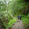 Glen Nevis Trail