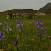 The Bluebell fields of Eigg on the walk to An Sgurr.