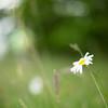 WildernessGalleries' photo